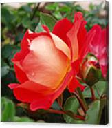Rose Garden Red Square-3 Canvas Print