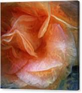 Rose Glows Canvas Print
