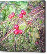 Rose Hip Imp Canvas Print