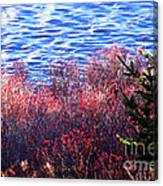 Rose Hips By The Seashore Canvas Print