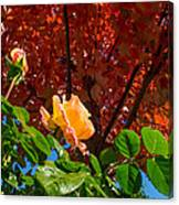 Rose In Autumn Canvas Print
