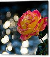 Rose In Dappled Afternoon Light Canvas Print