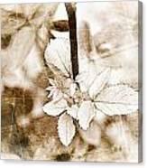 Rose Leaf Photoart Canvas Print