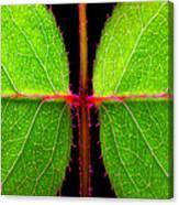 Rose Leaves Canvas Print