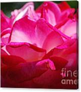Rose Like A Lotus Flower Canvas Print