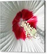 Rose Mallow - Honeymoon White With Eye 01 Canvas Print