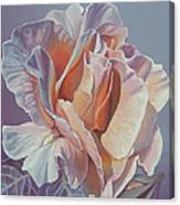 Rose 'marie Curie' Canvas Print