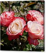 Rose Nostalgia  Canvas Print