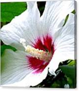 Rose Of Sharon # 2 Canvas Print