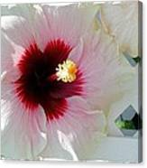 Hibiscus Flower Canvas Print