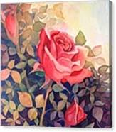 Rose On A Warm Day Canvas Print