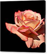 Rose On Black Background Canvas Print