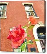 Rose On Brownstone Canvas Print