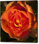 Rose Orange Canvas Print