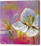 Rose Pecher Canvas Print