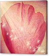 Rose Petal Canvas Print