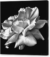 Rose Petals In Black And White Canvas Print