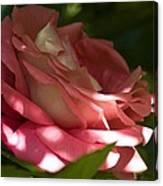 Rose Pink Canvas Print