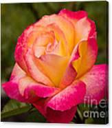 Rose Rainbow Sorbet Canvas Print