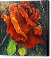Rose Red Canvas Print
