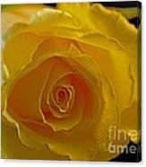 Rose -remeber Me Canvas Print
