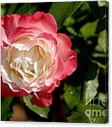 Rose Ruffles Canvas Print