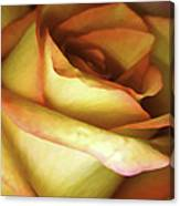Rose Scan Softened Canvas Print