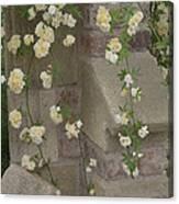 Rose Sprawling On Stone Canvas Print