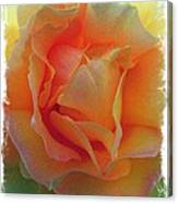 Rose Taken At Sunset  Canvas Print