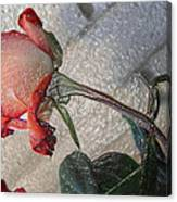 Rose To The Side 4 Canvas Print