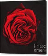 Red Rose On Black Canvas Print