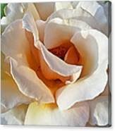 Rose Upclose Filtered Canvas Print