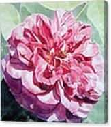 Watercolor Of A Pink Rose In Full Bloom Dedicated To Van Gogh Canvas Print