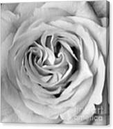 Rose With Heart B W Canvas Print
