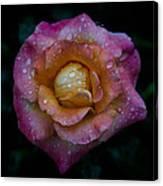 Rose With Rain Drops Canvas Print