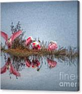 Roseate Spoonbills At Rest Canvas Print