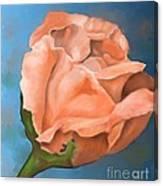 Rosebud Peaches And Cream Canvas Print