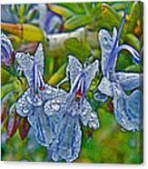 Rosemary In Fort Mojave-arizona Canvas Print