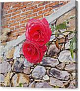 Roses Against The Wall Canvas Print