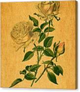 Roses Are Golden Canvas Print