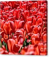Tulips At The Plaza Hotel Canvas Print