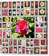 Roses Collage 2 - Painted Canvas Print