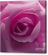 Roses Have Ruffles And Ridges Canvas Print