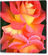 Roses Of Many Colors Canvas Print