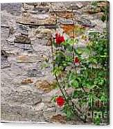 Roses On A Stone Wall Canvas Print