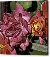 Roses On Trellis Canvas Print