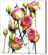 Roses (rosa 'mini Eden') Canvas Print