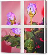 Roses Through The Window Canvas Print