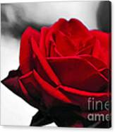 Rosey Red Canvas Print