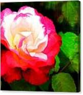 Rosie Red And White Canvas Print